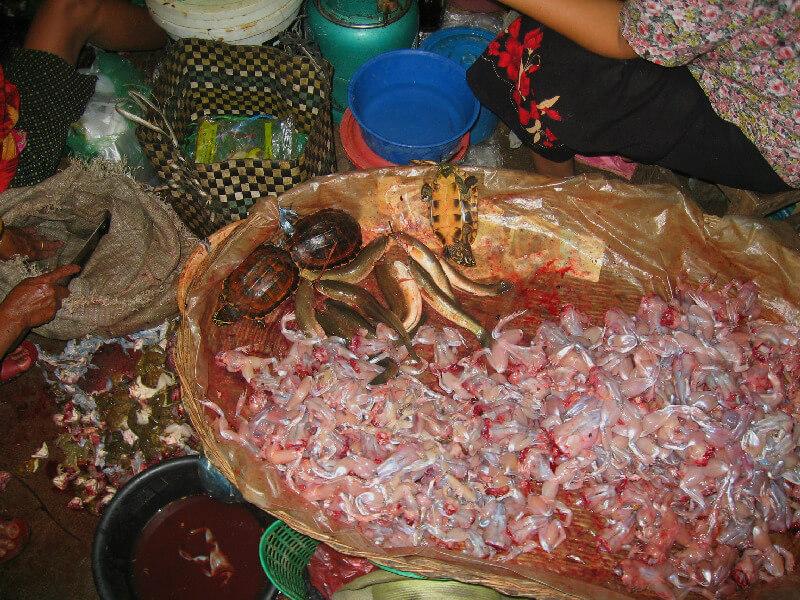 Backpacken Kampong Thom markt kikkers villen