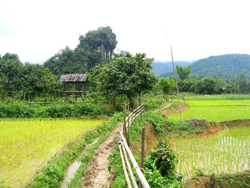 Vang Vieng platteland