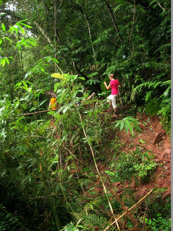 Luang Namtha jungle