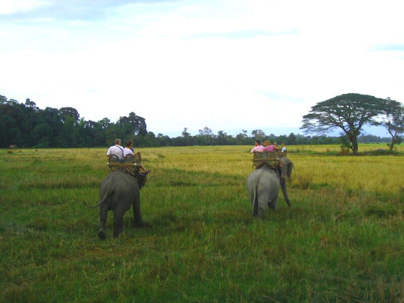 Reistips backpacken Bolaven plateau olifant rijden