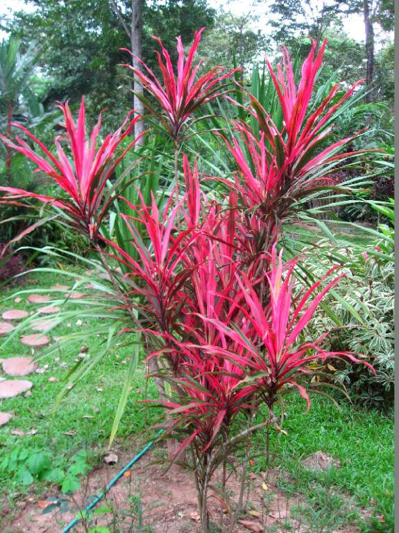 Reistips backpacken Bolaven plateau tropische plant