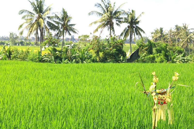 Rijstvelden bij Ubud, Bali