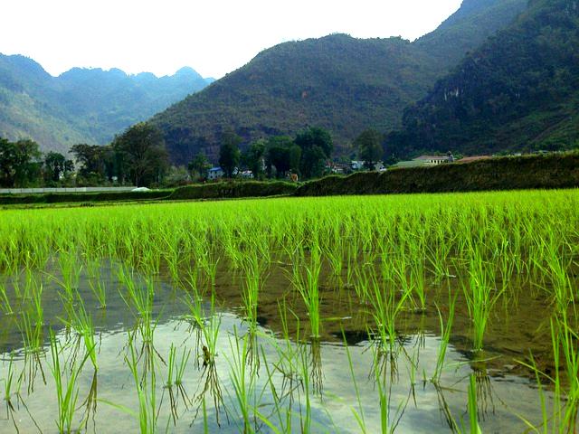 Mai Chau vallei