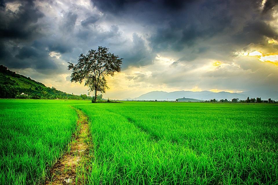 Dien Bien Phu vallei